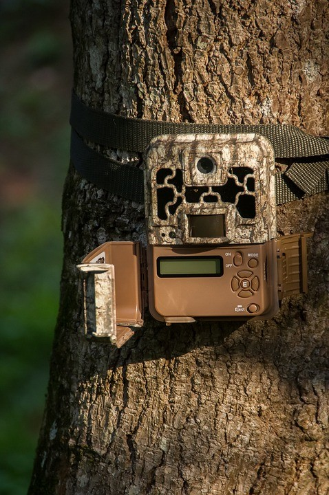 trail camera on bark